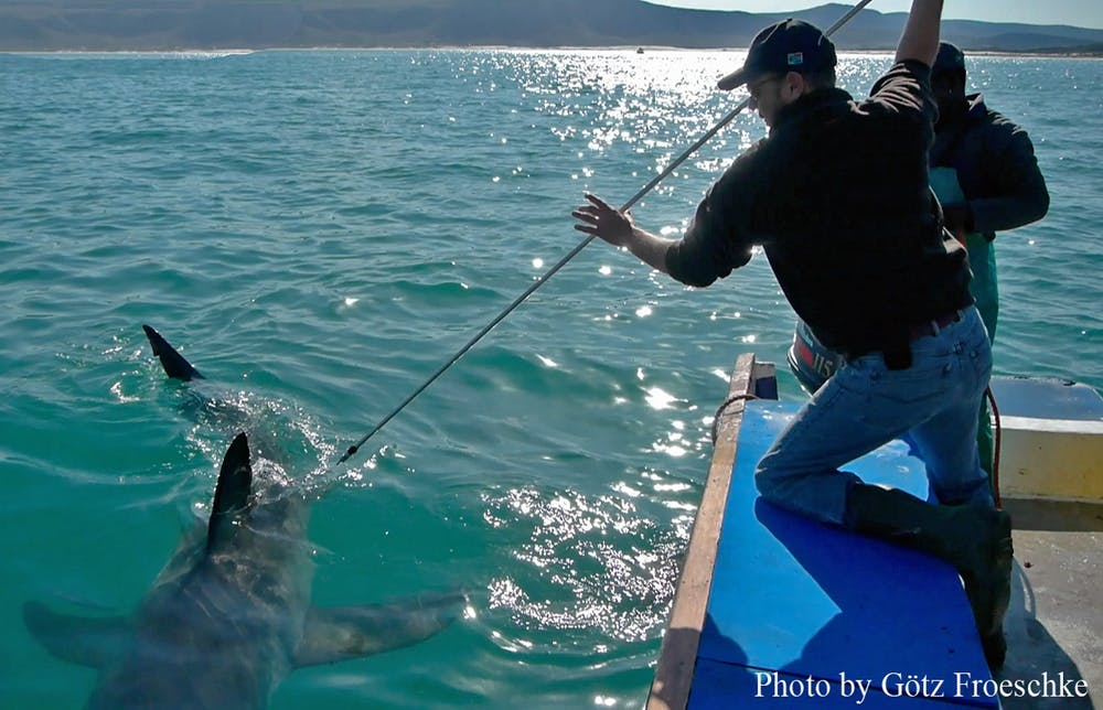 capturing dna sample from shark