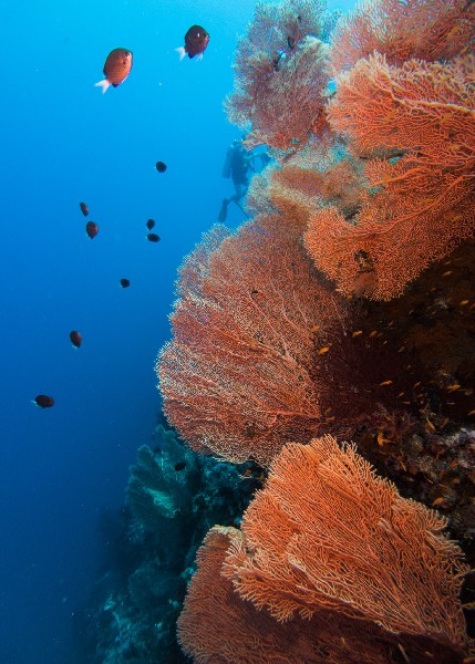 red sea diving south 1